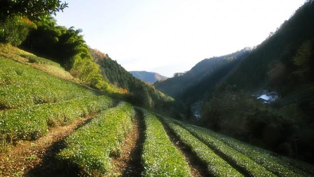 2016年2月27日(土)お茶で染めるワークショップ