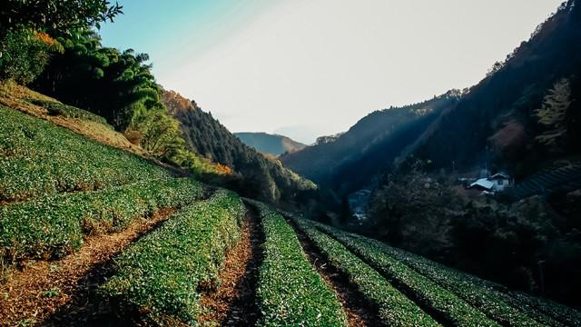 2016年11月6日(日) 鎌沢産緑茶を使った料理ワークショップ
