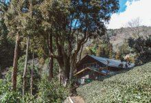 2017年3月20日(祝)、31日(金)お茶の木を使い、心の庭を作るワークショップ